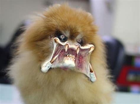 evil puppy evil puppy by tumiaus on deviantart