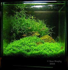 1000 images about planted aquariums on