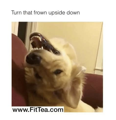 Frowning Dog Meme - dog frowning meme frowning best of the funny meme