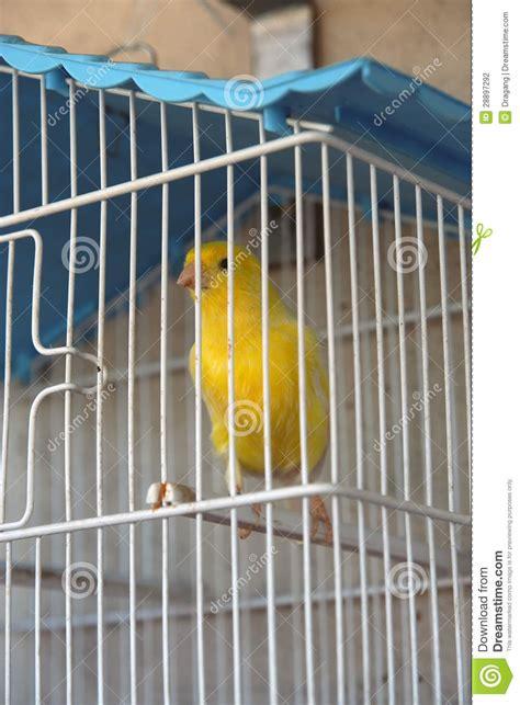 canary bird cage stock photos canary bird stock photo image of green color closeup