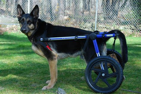 what do i need to build a dog house how to build a dog wheelchair ebay