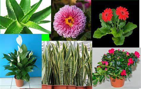 tanaman hias  bisa bersihkan udara youtube