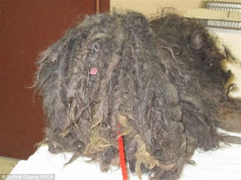 ziggy the gets adopted after he was found with matted