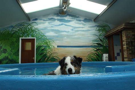 Hydrotherapy Woodlands Pet Carewoodlands Pet Care
