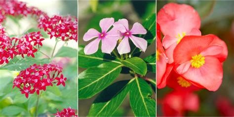 heat resistant plants 10 heat tolerant plants that will survive and thrive
