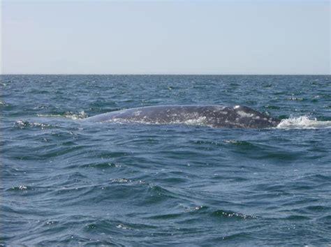 july feeding and fattening in food rich seas
