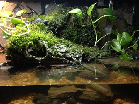 aqua terrarium designs miniature turtle aqua terrarium reptiles and hibians turtles miniature and aqua