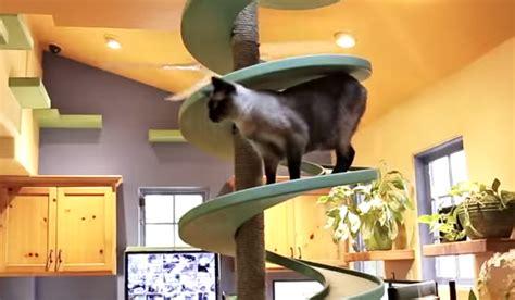nieuwe kat in huis huis ingericht voor katten lifestylelady nl