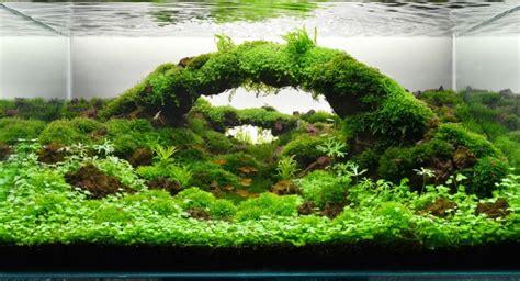 aquascape yang indah jenis jenis tanaman indah aquascape taman air aquascape