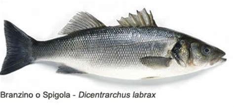 persico come cucinarlo come lessare vari tipi di pesce