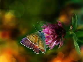 pictures of colorful butterflies colorful butterfly backgrounds 14 background wallpaper