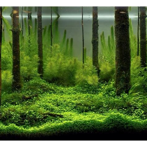 aquascape forest aquascape a fishy idea for the wet ones pinterest beautiful tree trunks and trees