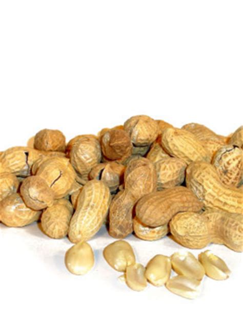 are peanuts bad for dogs this nut can cause temporary paralysis in dogs daily discoveries