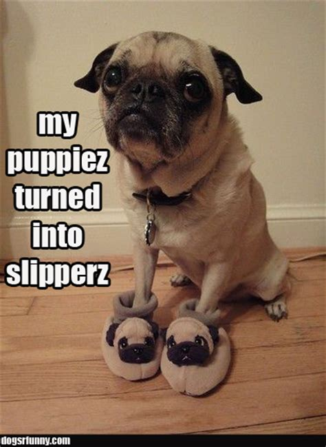 Pug   Dogs R Funny