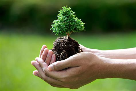 10 Things You Can Do To Help The Environment Beyond Earth