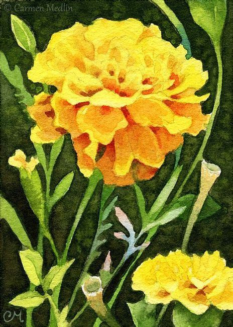 marigold paint happy marigolds aceo watercolor 3 pinterest