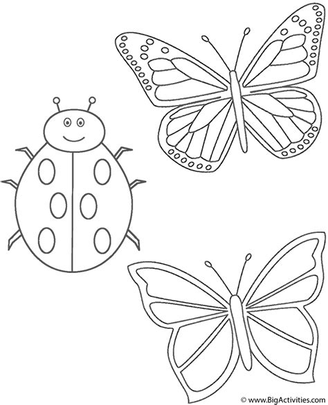 Coloring Pictures Of Butterflies And Ladybugs | two butterflies and ladybug coloring page insects