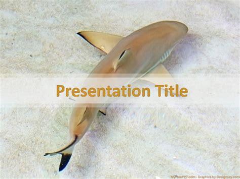 Free Shark Powerpoint Templates Myfreeppt Com Shark Powerpoint