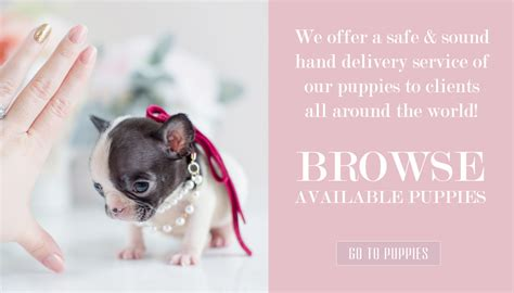 puppy delivery service teacup puppies for sale teacups puppies and boutique