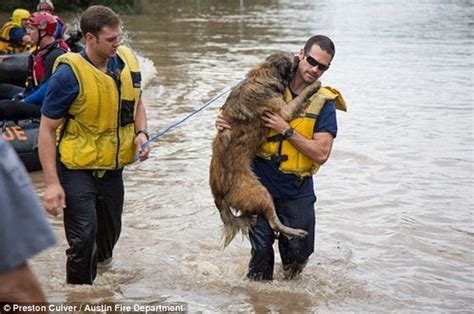 saving dogs we don t just rescue two legged victims touching moment firefighters save from