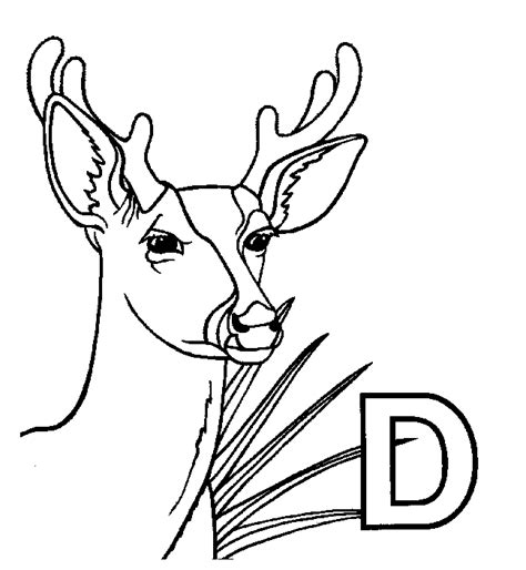 deer head outline coloring page coloring pages