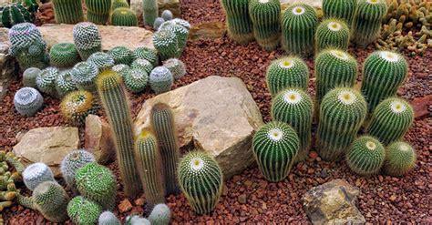 giardino con piante grasse giardino piante grasse come crearlo greenstyle