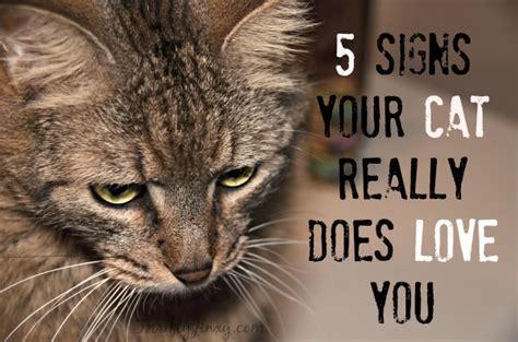 how to do a cat 5 signs your cat really does you a goodlife cat
