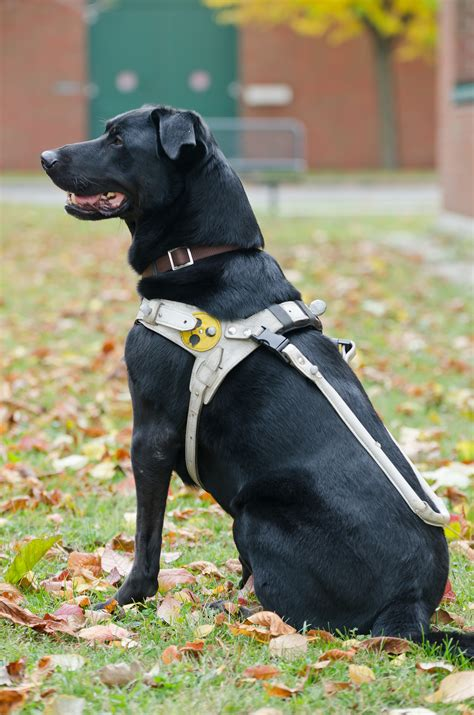 dogs walkthrough harness fit in guide dogs doggymom