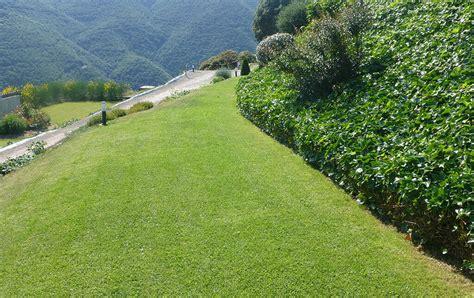 jardin con cesped jard 237 n con c 233 sped natural