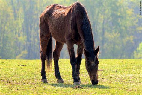 pferd eindecken ab wann wenn pferde in die jahre kommen pm forum digital ausgabe