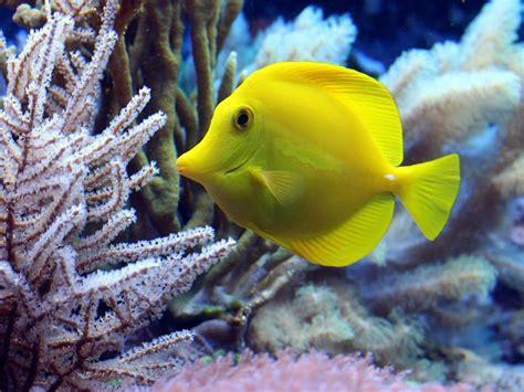 los peces de la 15 cosas incre 237 bles que no sabes de los peces 161 alucinante los peces s 237 tienen memoria