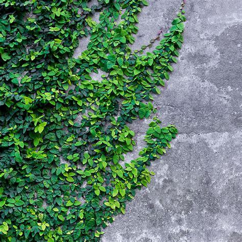 Wallpaper Qnap