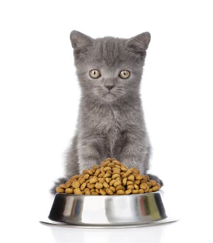 how often should you feed an 8 week puppy cat feeding guide 101 how much how often to feed a kitten