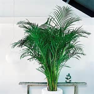plante tropicale interieur