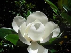 Utah State Bird And Flower - magnolia state symbols usa