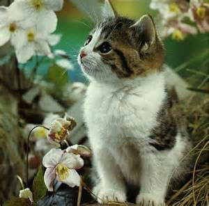 kittys darlene flickr
