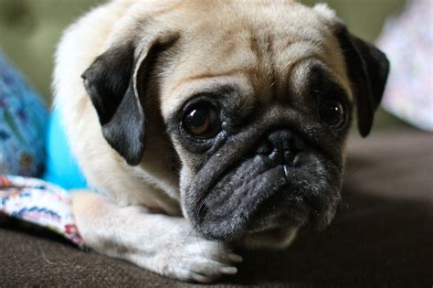 pug math pug slope 187 archive 187 why the