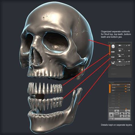 Zbrush Tutorial Skull | 59 best images about 3d models on pinterest water well