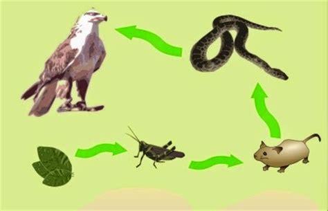cadenas y redes troficas o alimentarias ciencias ii unidad viii cadenas alimentarias y redes