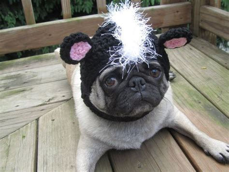 pug with hat sweethoots pug hats animals