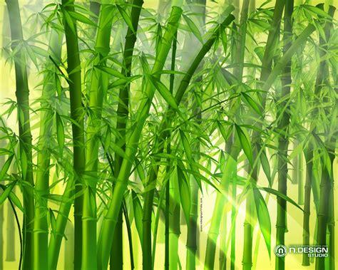 Pohon Bambu Dracena Golden Pohon Dracena Pohon Brasena Golden bamboo green wallpaper 1280x1024 wallpoper 417033