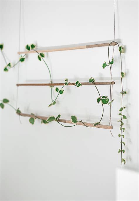 indoor vine diy an indoor trellis for climbing vines gardenista
