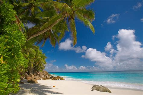 Palm Tree Wall Mural seychelles perfect place for perfect vacation