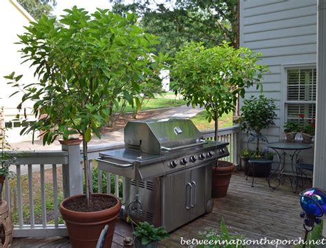 Small Backyard Decks Patios Leyland Cypress Trees Offer Screening And Privacy