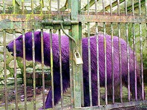 hewan  warna  corak tidak biasa  basir