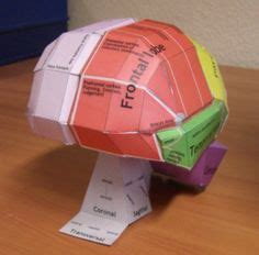 Human Papercraft - how to make the inside brain model the brain quot papercraft