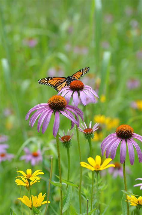 butterfly  hummingbird garden kit  moist soils