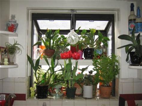 kitchen window planter box my pale green thumb kitchen window box