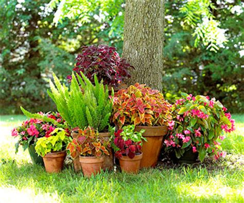 interesting ideas to use containers around a tree or in shaded areas container gardening