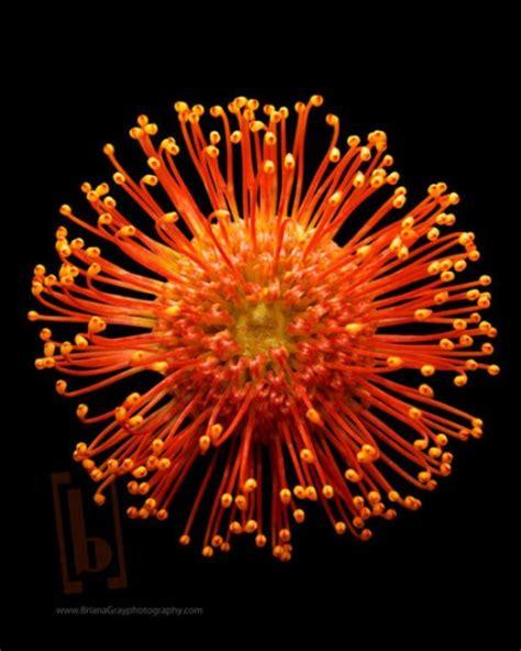 fireworks    flowers flowers
